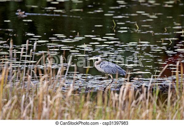 Algonquin Park Muskoka Ontario - csp31397983