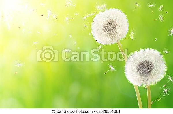 Aliento de primavera, alergia - csp26551861