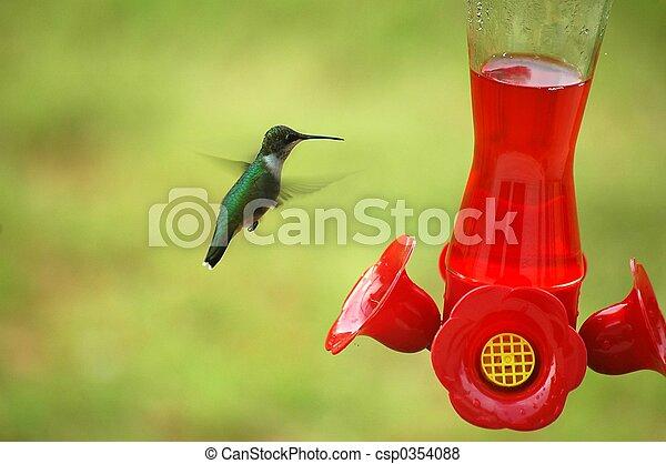 alimentación, colibrí - csp0354088