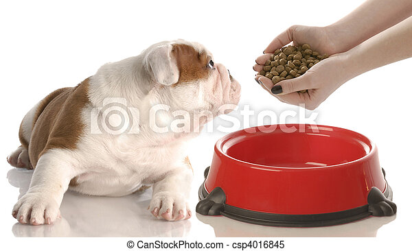 alimentation, chien - csp4016845