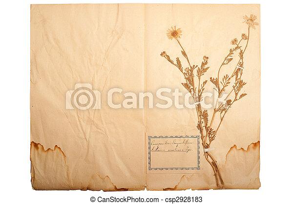Alle Fleur Jaune Papier Seche Vieux Alle Fleur Feuille