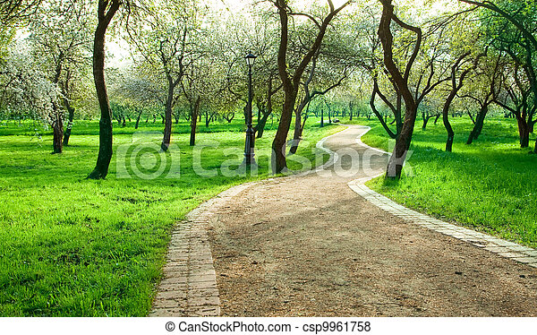 Alley in green apple garden. spring morning. pictures - Search ...