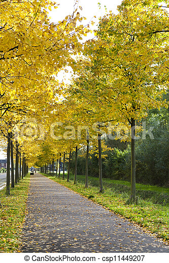 alley with yellow autumn trees - csp11449207