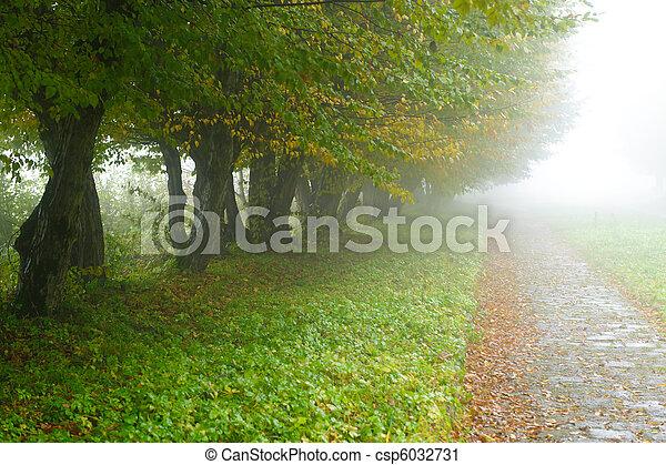 alleyway in foggy park - csp6032731