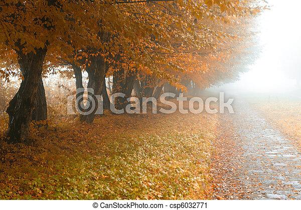 alleyway in foggy park - csp6032771
