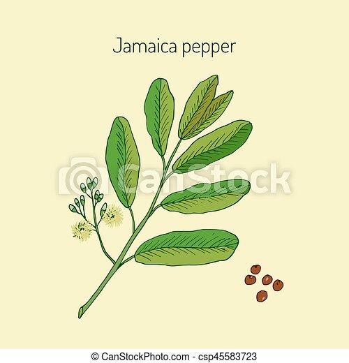 Allspice, or Jamaica Pepper