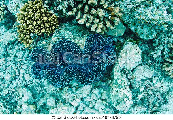 Almeja gigante en el arrecife de coral tropical - csp18773795