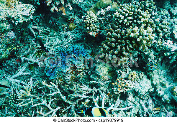 Almeja gigante en el arrecife de coral tropical - csp19379919