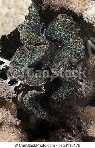 Almeja gigante y océano. - csp3118178