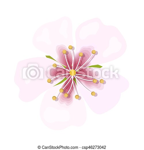 Almond pink flower isolated on white background. Macro, closeup - csp46273042
