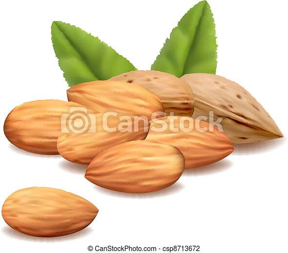 almond.vector - csp8713672