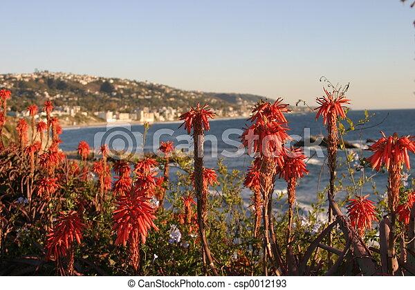 Aloe Vera flowers - csp0012193