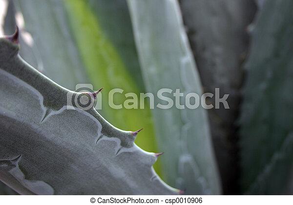 Aloe Vera - csp0010906