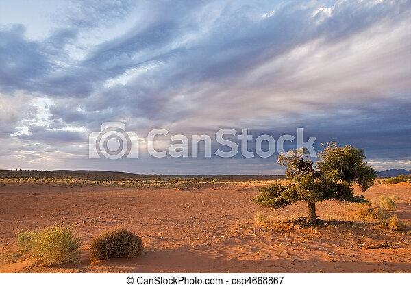 Alone tree in desert - csp4668867