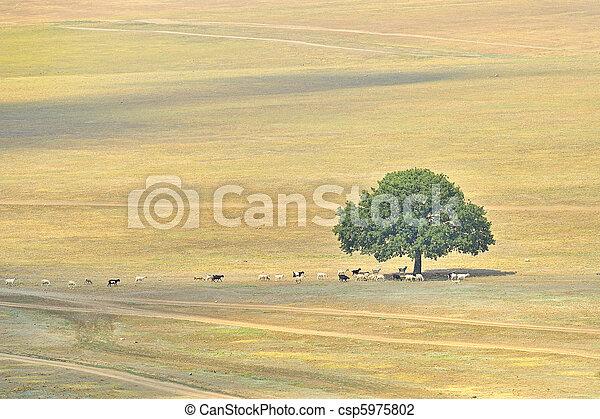 alone tree on autumn - csp5975802