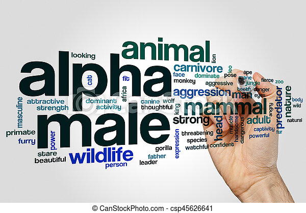 Alpha male word cloud concept on grey background - csp45626641