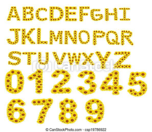 alphabet A-Z , sunflower isolated on white background - csp19786922