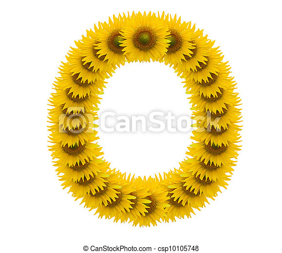 alphabet O, sunflower isolated on white background - csp10105748