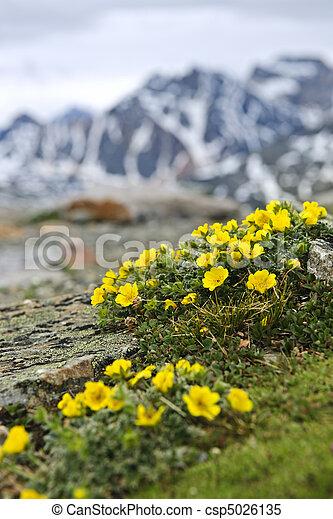 Alpine meadow in Jasper National Park - csp5026135