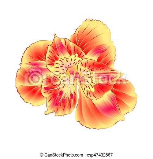 Alstroemeria flower lily closeup isolated on white clip art alstroemeria flower lily closeup isolated on white background vintage hand draw vectoreps mightylinksfo Gallery
