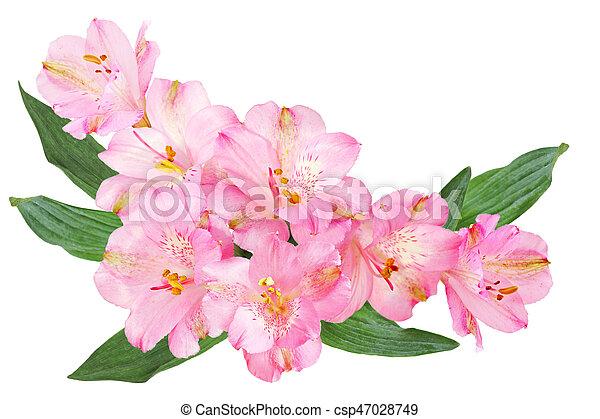 Alstroemeria flowers pink alstroemeria peruvian lily flowers alstroemeria flowers csp47028749 mightylinksfo