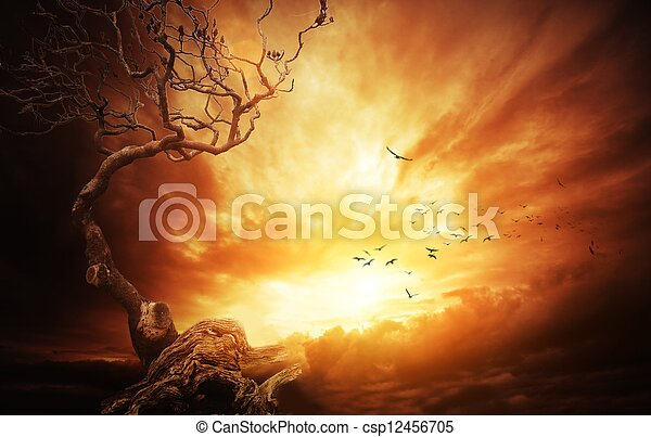 altes , aus, baum, stürmisch, sky. - csp12456705