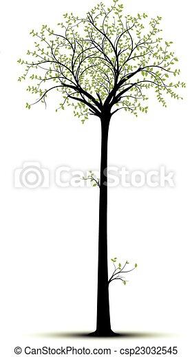 Árbol alto - csp23032545