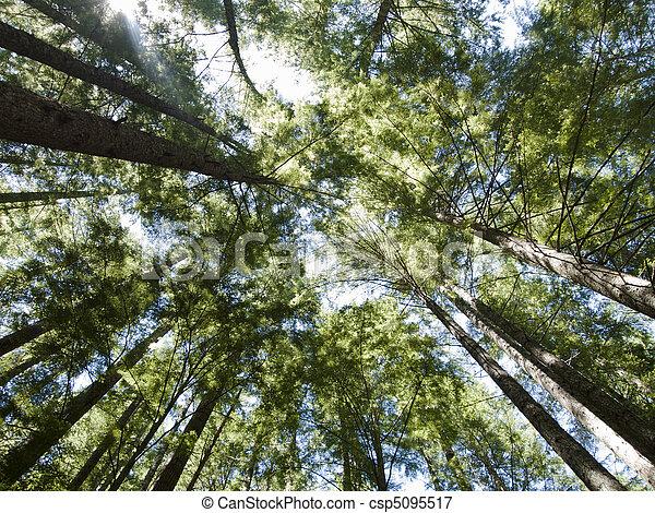 Alto bosque rboles rbol hoja perenne proporcionado for Ver fotos de arboles de hoja perenne