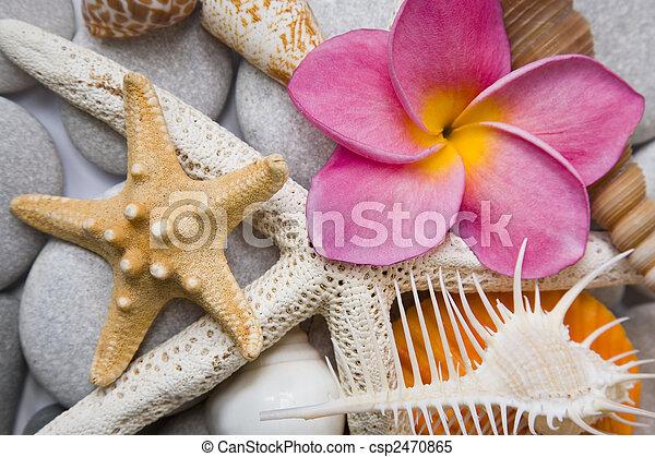 Conchas marinas en alto tono - csp2470865