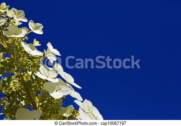 Alyssum flowers blue sky stalk of shallow dof four petal white alyssum flowers blue sky csp10067197 mightylinksfo