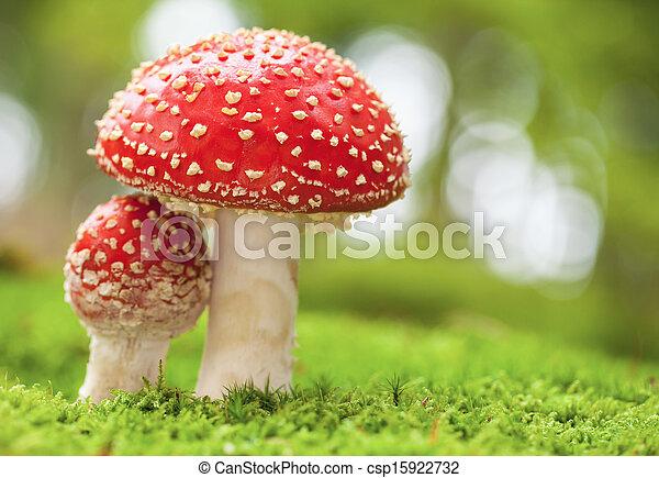 Amanita muscaria - csp15922732