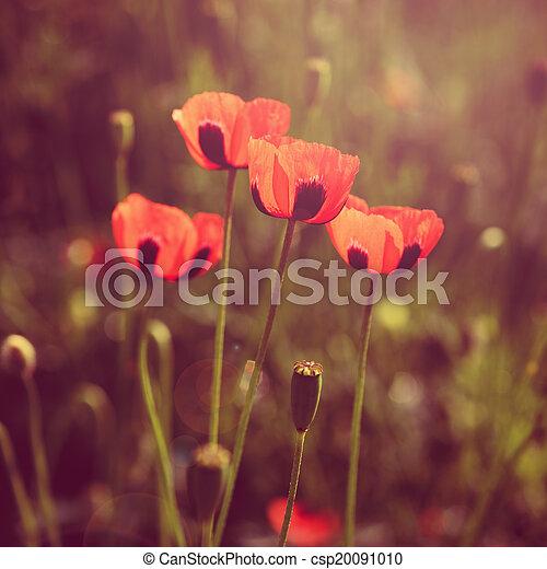 Poppy Flowers retro look - csp20091010