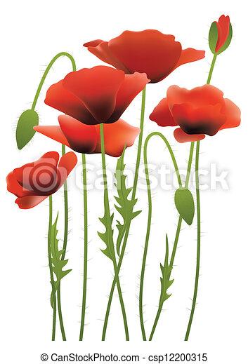 Flores de amapola roja - csp12200315