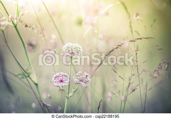 Amazing sunrise at summer meadow with wildflowers. Abstract flor - csp22188195