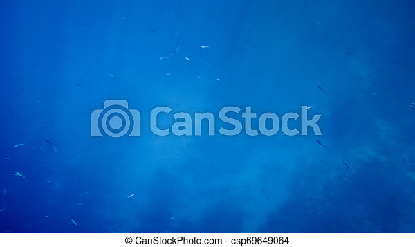 Amazing underwater image of Red sea bottom. Colorful coral fishes and growing reef under the water surface - csp69649064