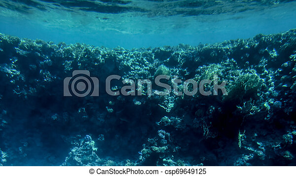 Amazing underwater image of Red sea bottom. Colorful coral fishes and growing reef under the water surface - csp69649125
