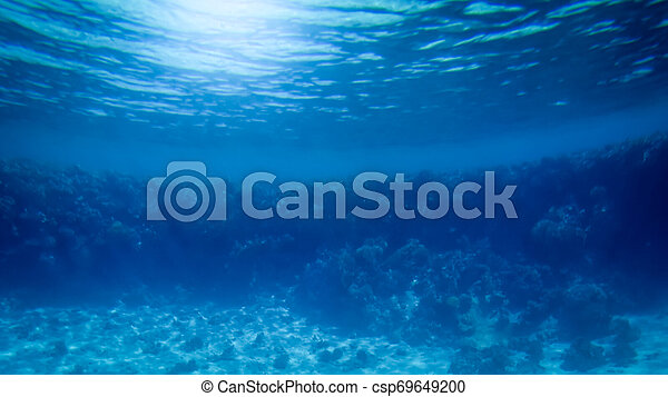 Amazing underwater image of Red sea bottom. Colorful coral fishes and growing reef under the water surface - csp69649200
