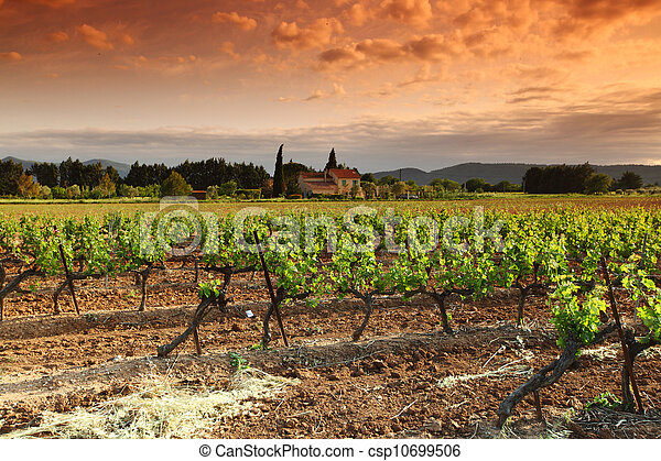 Amazing Vineyard Sunset in france - csp10699506