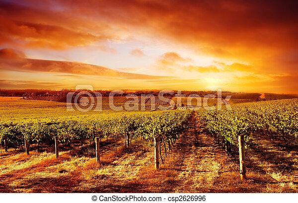 Amazing Vineyard Sunset - csp2626996