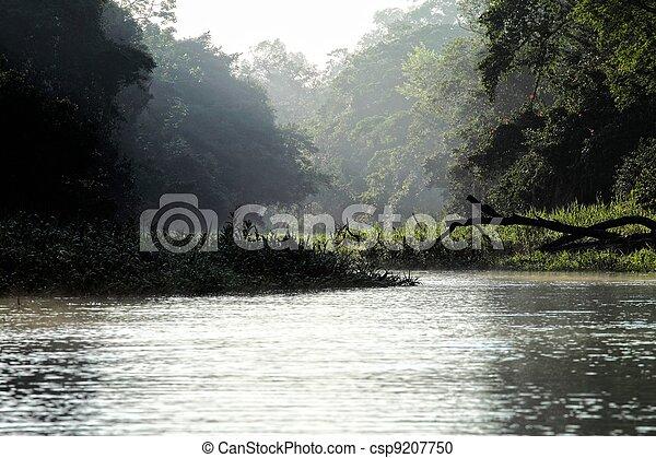 Amazon Riverbank. HDR image - csp9207750