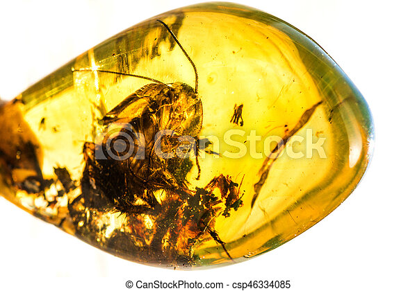 Amber with embedded insect - csp46334085