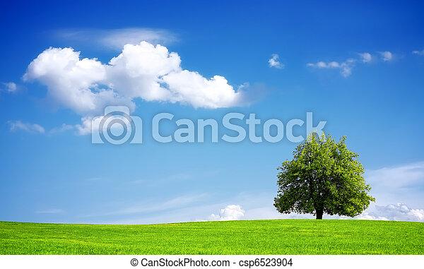 Medio ambiente - csp6523904
