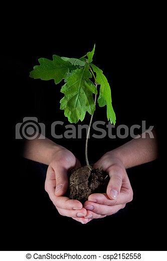 Medio ambiente - csp2152558