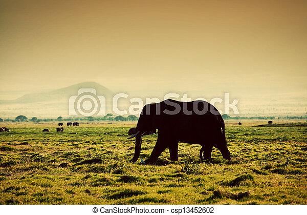 amboseli, アフリカ, savanna., サファリ, 象, kenya - csp13452602