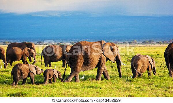 amboseli, 家族, 象, アフリカ, savanna., サファリ, kenya - csp13452639