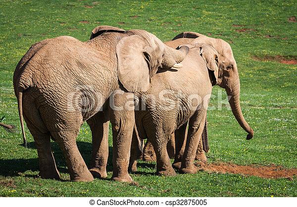 amboseli, 家族, 象, アフリカ, savanna., サファリ, アフリカ, kenya - csp32875005