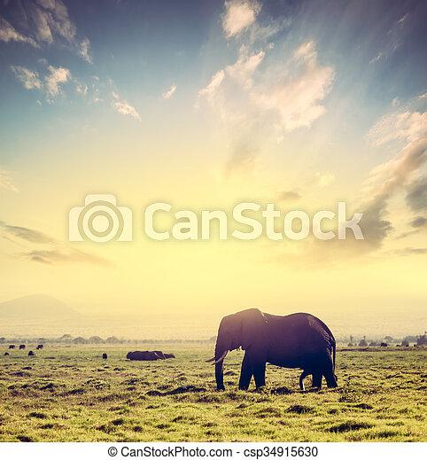 amboseli, 象, アフリカ, サファリ, アフリカ, sunset., kenya, サバンナ - csp34915630