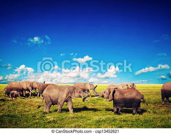 amboseli, 象, アフリカ, savanna., サファリ, 遊び, kenya - csp13452621