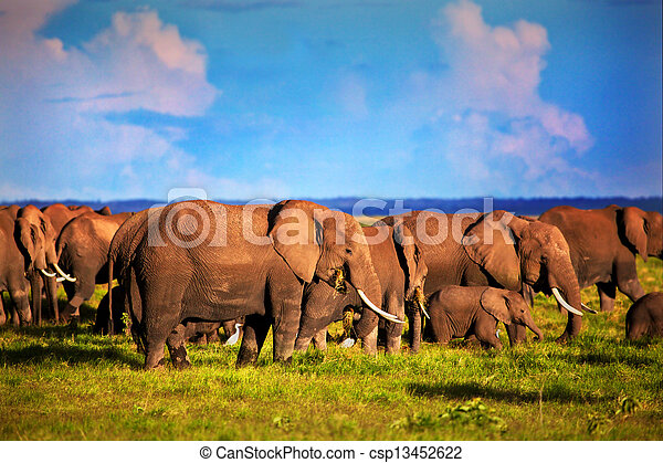 amboseli, 象, アフリカ, savanna., 群れ, サファリ, kenya - csp13452622