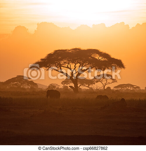 amboseli, elefant, ondergaande zon , kalf, moeder - csp66827862